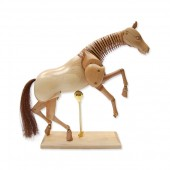 Equine Lay Figure