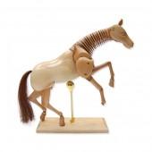 Equine Lay Figure